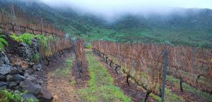 vinatigo-vineyard-sea-of-clouds-01
