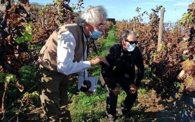 Canary Wine presenta un estudio y diagnóstico de la viticultura en Tenerife